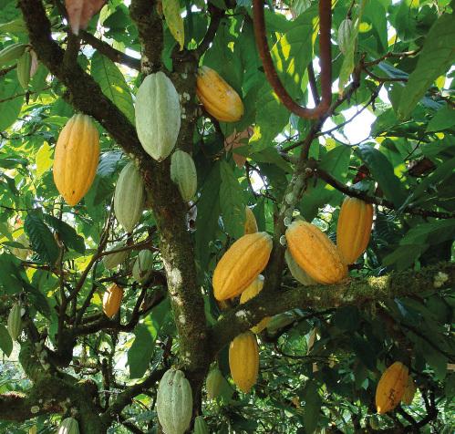 Illus Carrousel Cacao 03